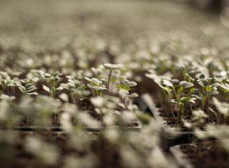 Culture hydroponique : la nouvelle manière de cultiver hors-sol !