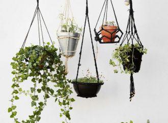 Les meilleures plantes retombantes