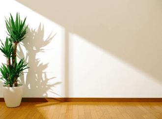 Yucca d'intérieur : nos conseils pour bien l'entretenir