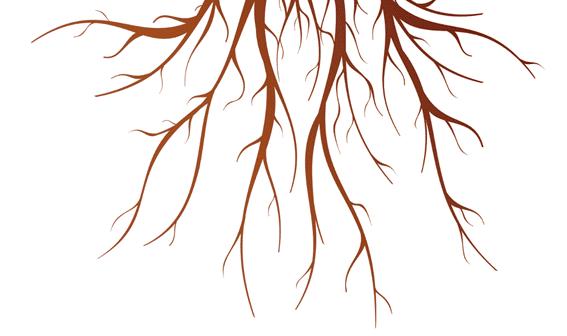 Comment favoriser le développement des racines des plantes