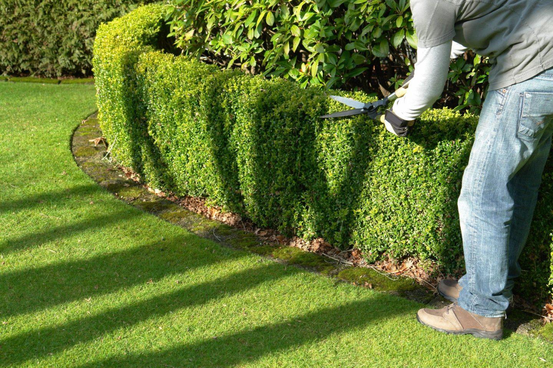 L'aménagement de la végétation d'un jardin