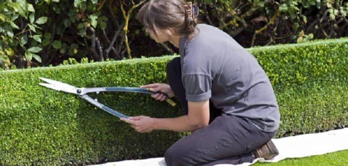 Quand couper sa pelouse et sa haie