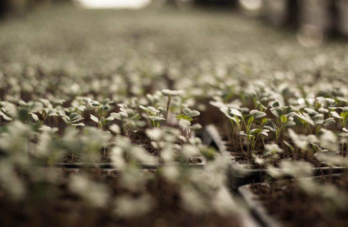 3 conseils pour bien organiser son potager dans un petit jardin