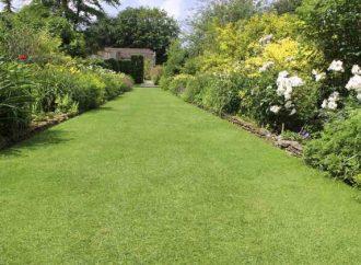 Quand et comment arroser la pelouse ?