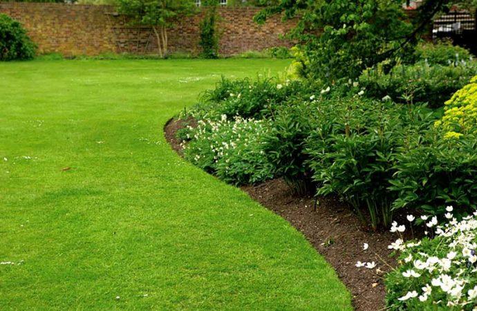 Quelles plantes placer en bordure de massif ?