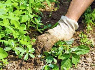 Désherbant naturel : les meilleures méthodes pour désherber votre jardin naturellement