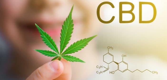 Comment est cultivé le CBD, désormais autorisé en France ?