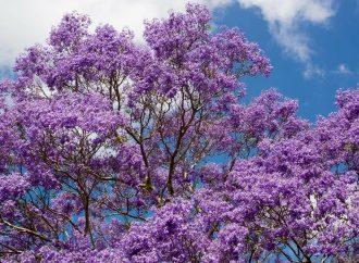 Les meilleurs arbres à croissance rapide pour votre jardin