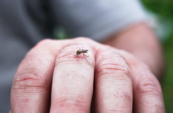 Piqûre de moustique : comment les soulager ?